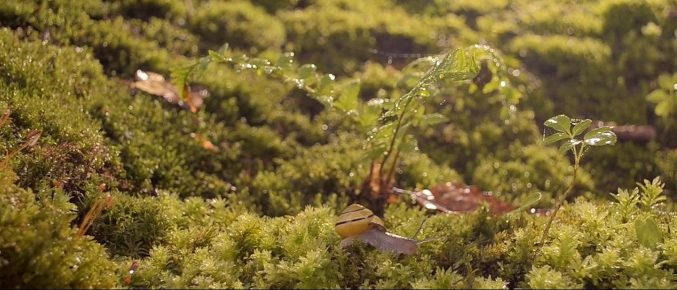 Cena de Life on Moss